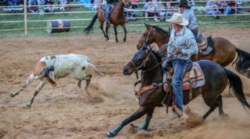 Rodeo Horse Is Jewel In Crown